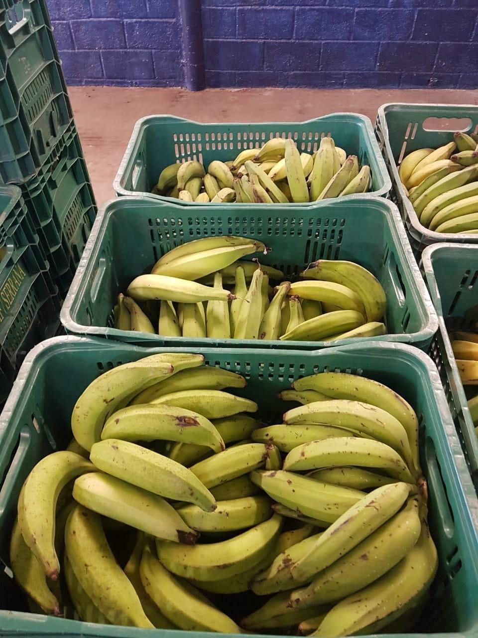 Gêneros alimentícios da agricultura familiar compõem cestas básicas para alunos da Rede Estadual