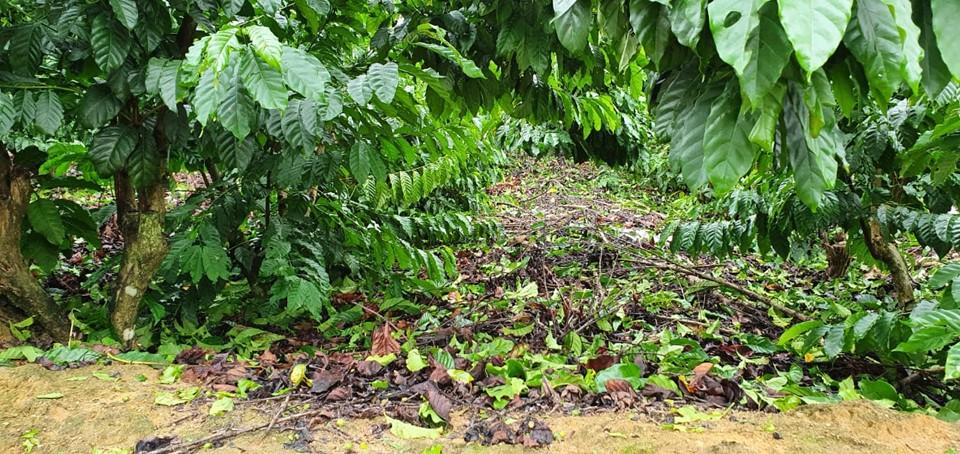 Incaper apresenta relatório de perdas na agropecuária devido aos eventos climáticos