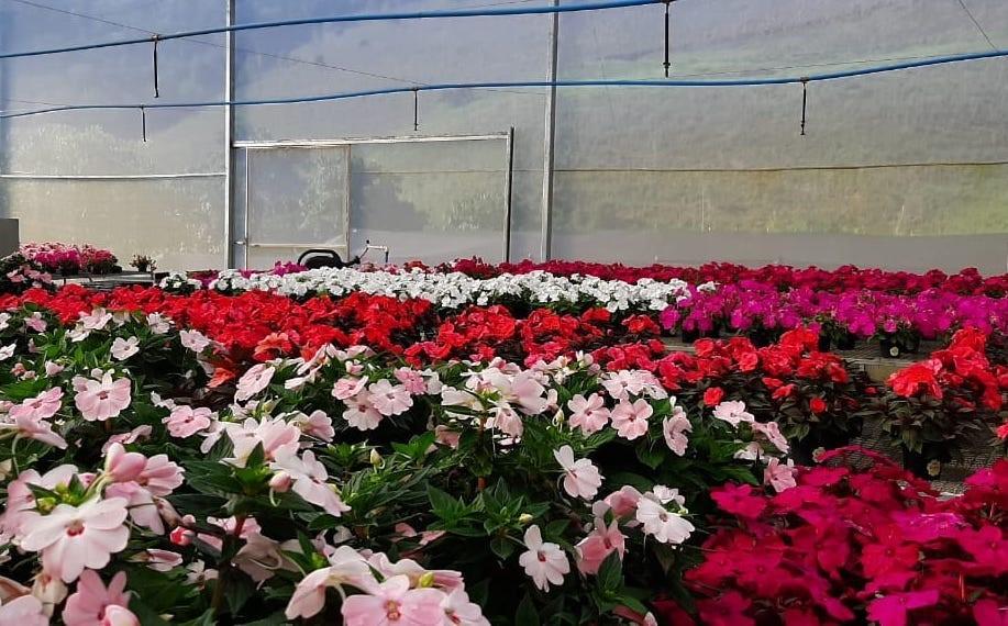Incaper realiza webinário sobre criatividade na floricultura para superar impacto da pandemia