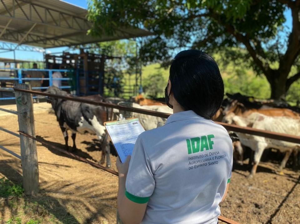 Idaf acompanha vacinação contra a febre aftosa e orienta alunos, em fazenda na Serra