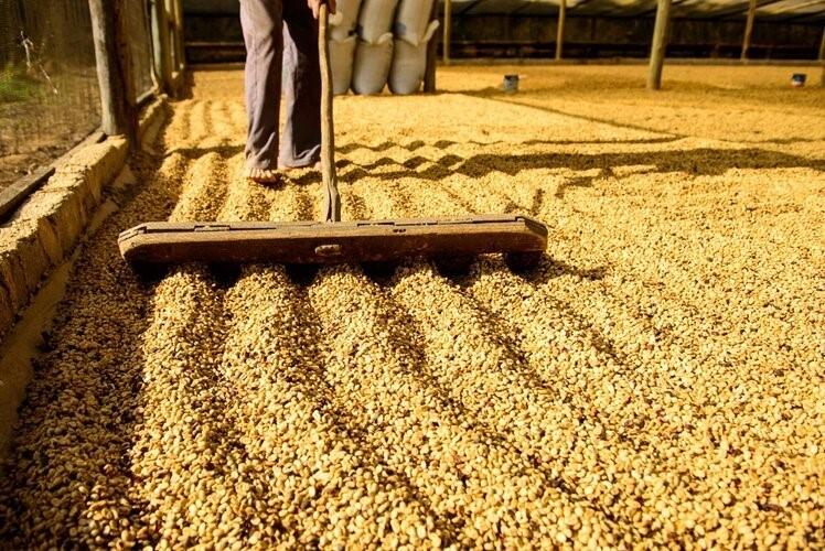 Secretaria da Fazenda realiza operação para proteger produtores de café