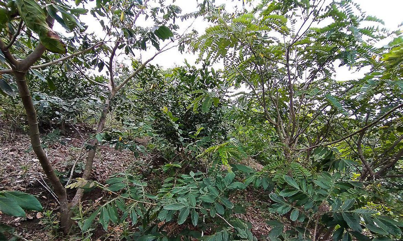 Brasil passa a fazer parte do Protocolo de Nagoia sobre biodiversidade