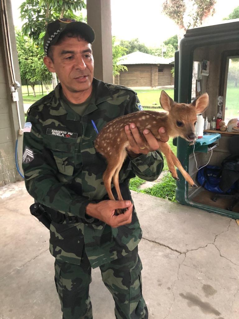 BPMA resgata filhote de veado mateiro em Santa Maria de Jetibá