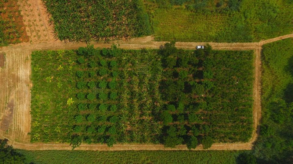 Incaper lança série de vídeos com resultados da pesquisa sobre café sombreado