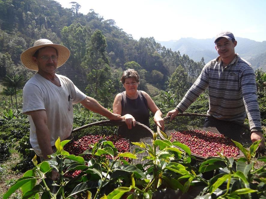 Café de Brejetuba tem crescimento de 250% na produção com adoção de práticas sustentáveis
