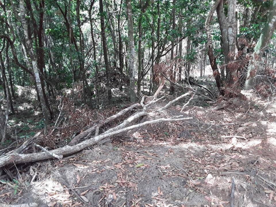 Idaf e Polícia Ambiental identificam desmatamento irregular em Fundão