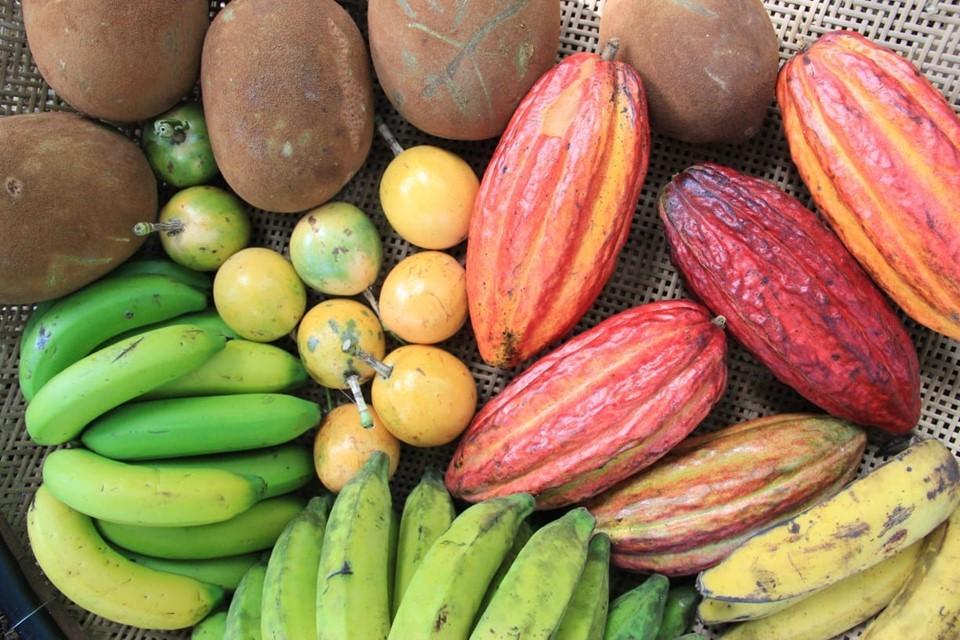 Seag discute Projeto de Unidades Técnicas Demonstrativas em Fruticultura na região do Caparaó