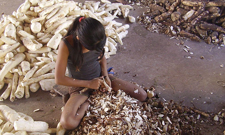 Direitos Humanos IBGE: Brasil tem 4,6% das crianças e adolescentes em trabalho infantil