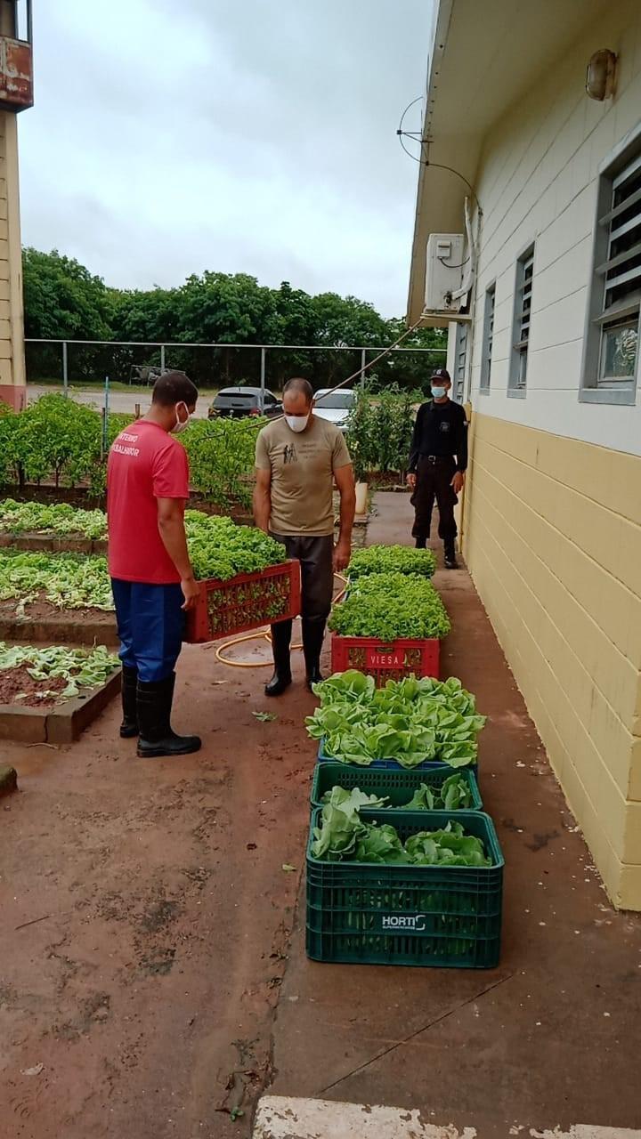 Produção de horta em presídio é doada a hospital e asilos no sul do Estado