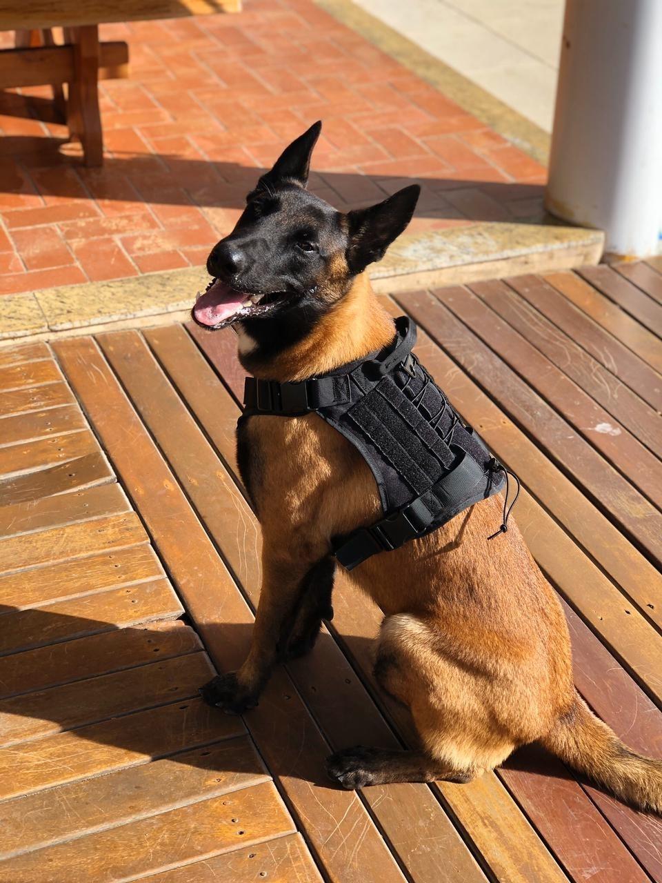 Cão farejador Baruck: Denarc de Aracruz ganha novo integrante