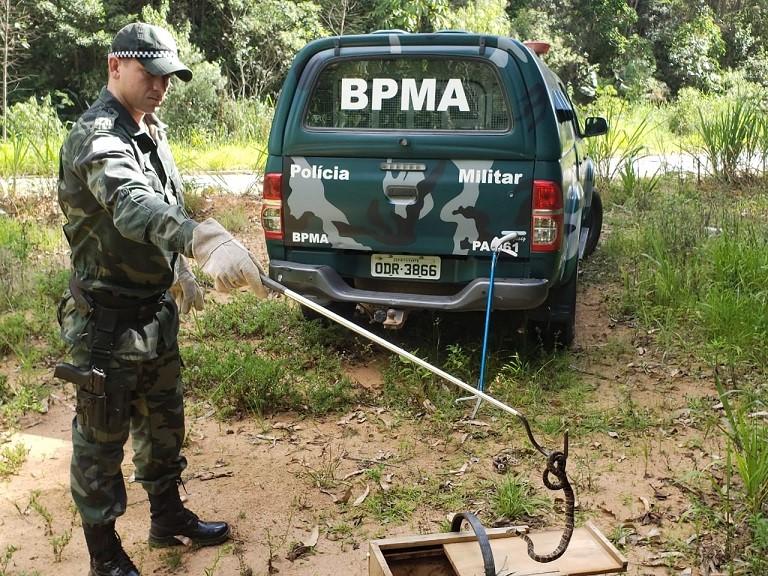 BPMA resgata serpente dentro de veículo em Santa Teresa