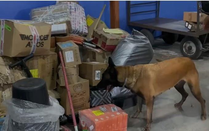 Denarc e Cioc apreendem entorpecentes em bagagens na Rodoviária de Vitória