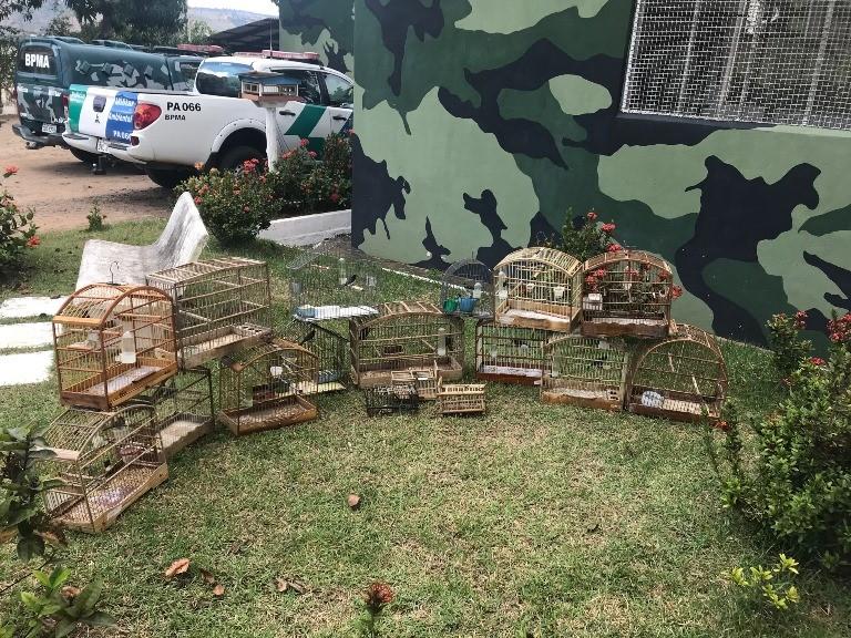 BPMA apreende animais silvestres e armadilhas para captura de pássaros no fim de semana