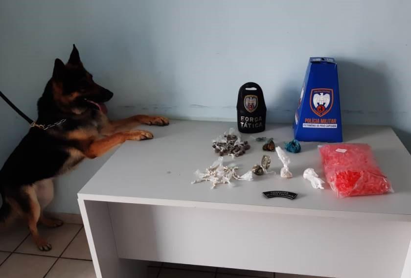 Polícia Militar apreende drogas com auxílio de cão farejador em Pinheiros