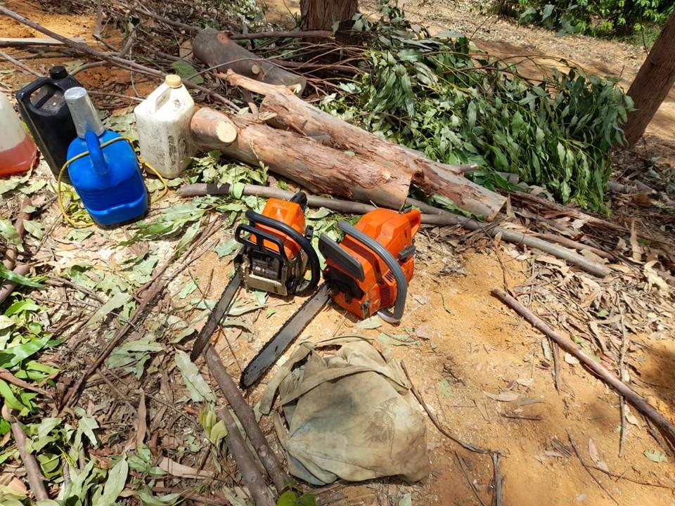 Polícia Militar Ambiental detém duas pessoas por extração ilegal de madeira em Nova Venécia