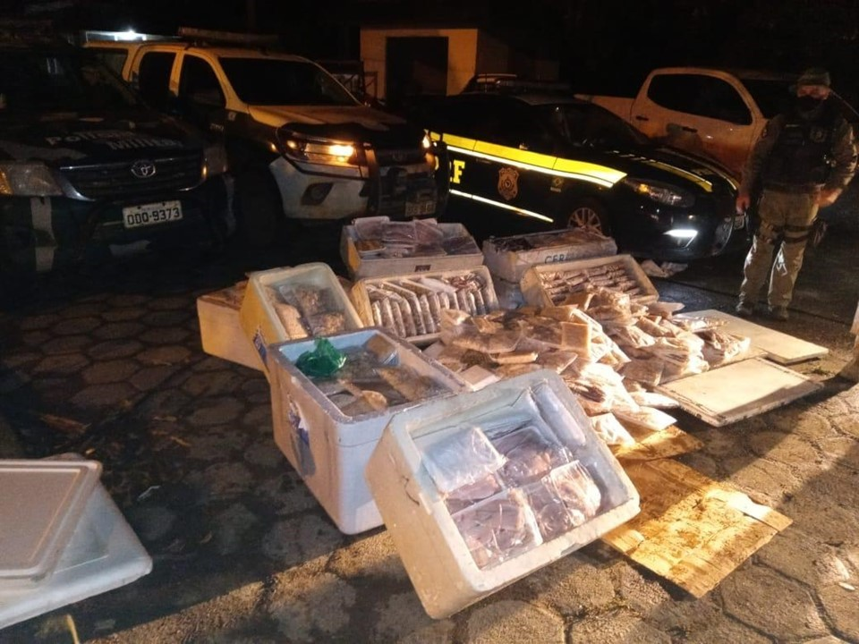 Carga irregular de pescado é apreendida em Pedro Canário