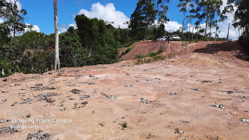 Operação de combate ao desmatamento ilegal continua em Santa Teresa