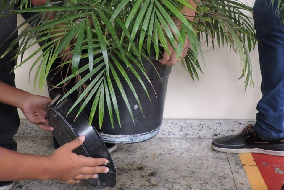 Dengue: fique atento aos sintomas da doença