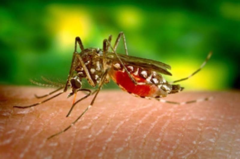 Aedes aegypti: reunião discute diretrizes para enfrentamento das doenças transmitidas pelo mosquito